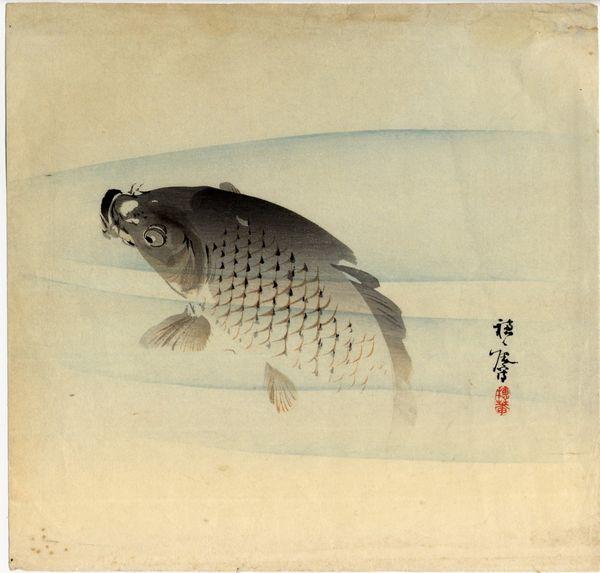 Carpe Suian Hirafuku M